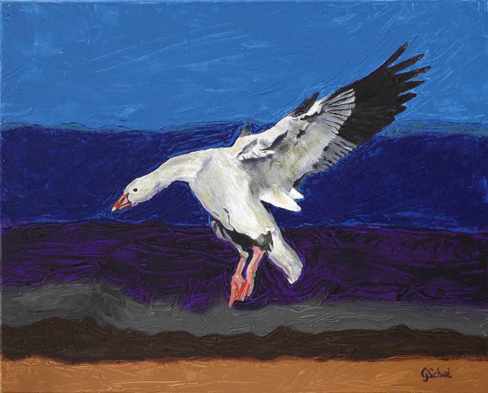 Snow Goose - 24x30 Acrylic on Stretched Canvas with Image Wrap Border
